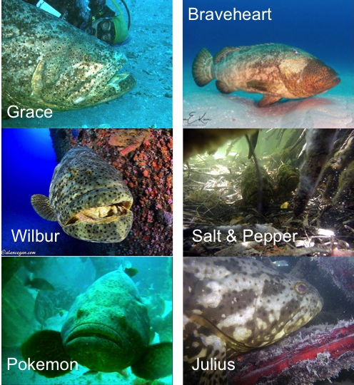 All Groupers Plate v2